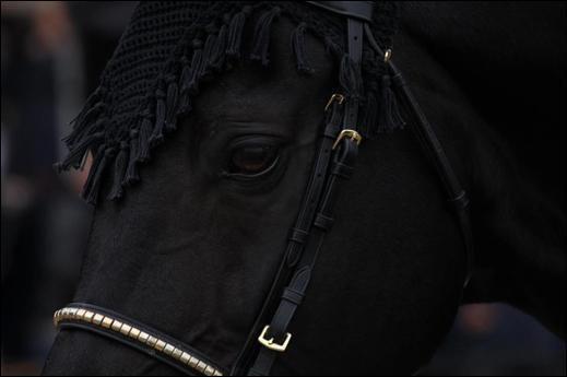 L'½il d'un cheval