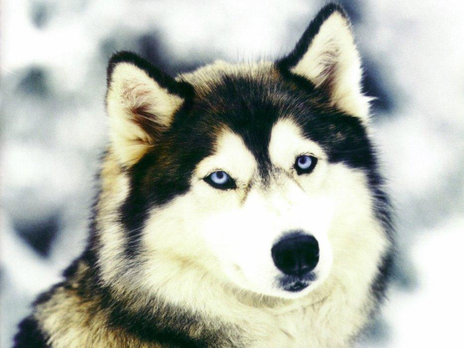 Blog de animal27