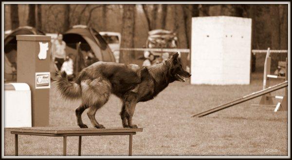 de nouvelles photos !! les chiens