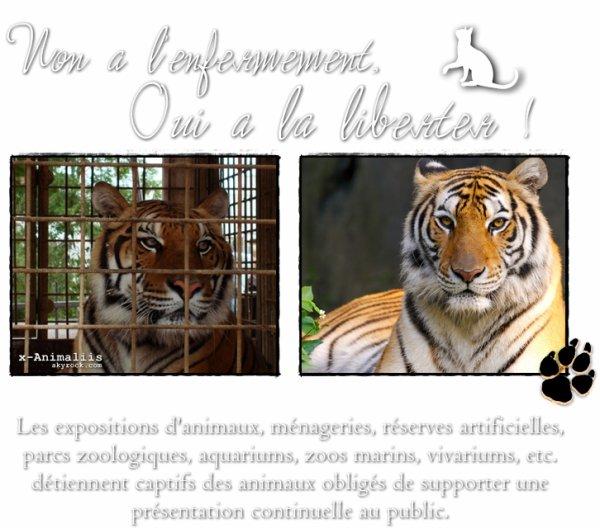 Il y a des Animaux qui ne devraient pas vivre en cage ...