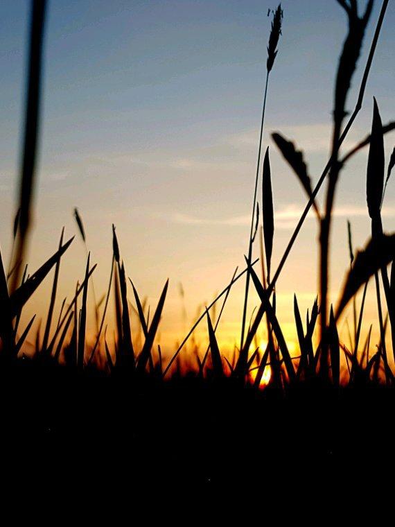 Quand mes bougainvillées se mêlent aux herbes folles Dans ta chaleur biguine au crépuscule créole Je n'ai plus de mots assez durs Pour te dire que je t'aime