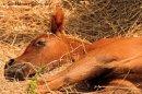 Photo de x-So-Horses-88-x
