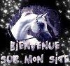 Bienvenue sur mon blog sur les chevaux!