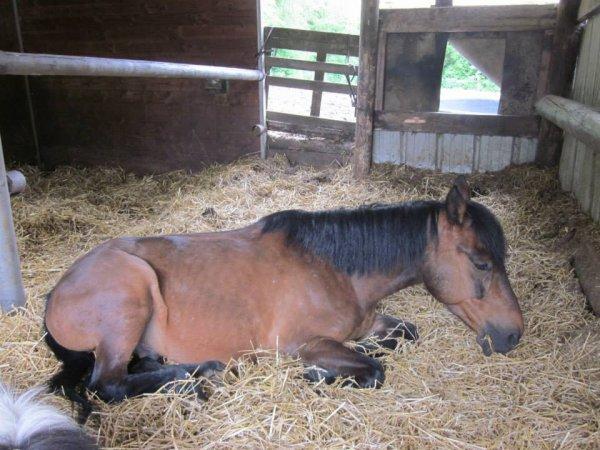 Si quelqu'un te dis ce n'est qu'un cheval, contente toi de sourire, il ne peuvent pas comprendre.