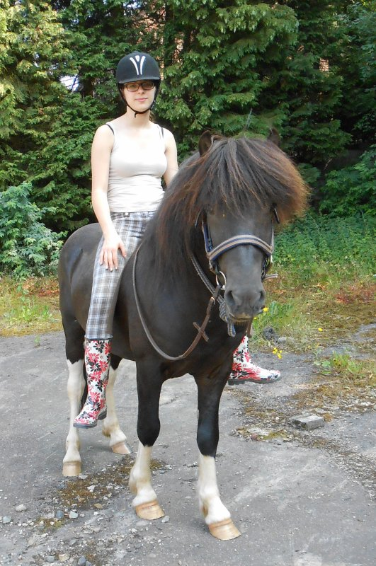 Island-Pferd Griffill