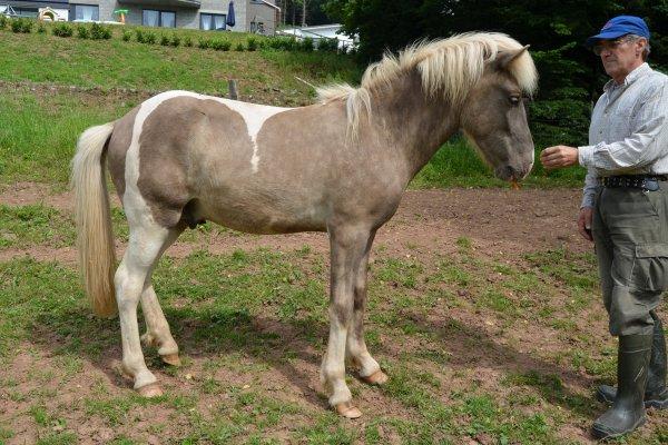 Galdur - das erste Fohlen von Griffill