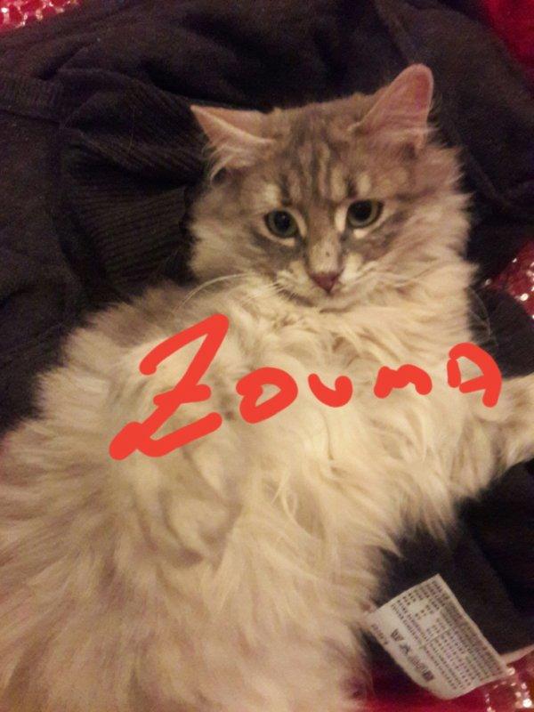 ma princesse  zouma
