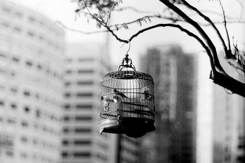 «Ma cage, soigneusement peinte d'un dorée sans reflet. A l'intérieur, il n'y avait que le vide.» ©