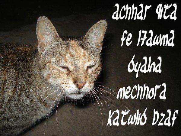 achhar 9ita fe l7awma