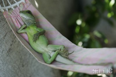 henry lizardlover c + belle photos
