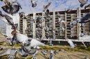 Photo de pigeonvole62137