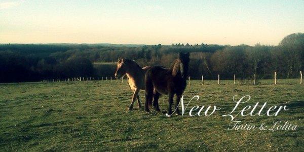 """""""On a tendance, de nos jours, à oublier que l'équitation est un art. Or, l'art n'existe pas sans amour. Mais celui qui n'a pas la discipline nécessaire et qui ne possède pas la technique ne peut prétendre à l'art. L'art, c'est la sublimation de la technique par l'amour. L'amour, afin qu'après la mort du cheval, vous ayez gardé en votre c½ur le souvenir de cette entente, de ces sensations qui ont quand même élevé votre esprit au-dessus des misères d'une vie humaine."""""""