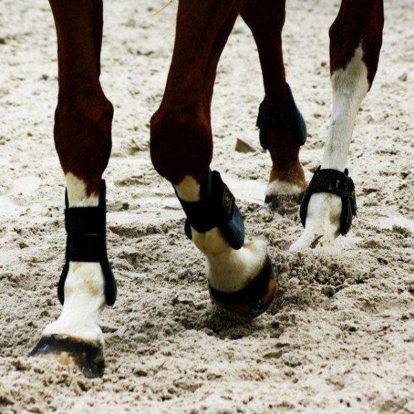 » La colère est pareille à un cheval fougueux ; si on lui lâche la bride, son trop d'ardeur l'a bientôt épuisé.