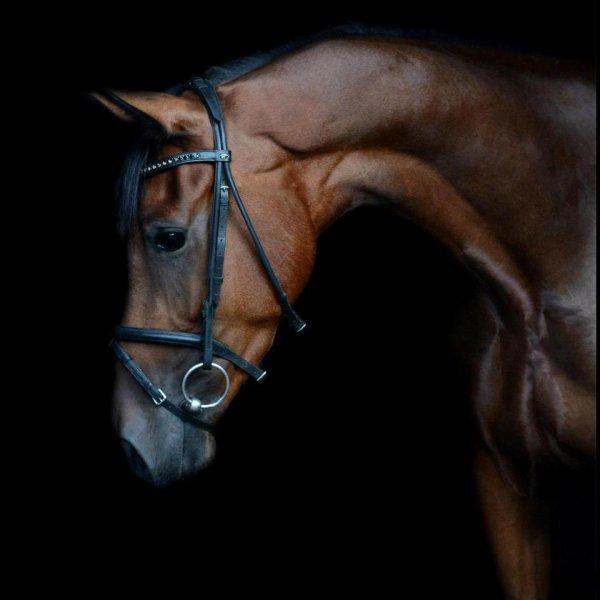 """""""Stop ! Taisez vous ! Je me fiche bien de savoir ce que vous pensez de lui. Parce que voyez-vous, ça n'a aucune importance ! Non, je l'ai pas acheté pour qu'on me dise """"il est beau ton cheval"""" ou """"c'est un crack ton cheval"""", j'men moque de savoir que si c'était le votre vous auriez jamais pu le supporter, qu'un cheval aussi fragile c'est quand même pas croyable, on me l'a pas offert pour qu'on me le désire, pour qu'on me sorte """"T'as trop de la chance!"""" Non, moi j'ai pas un cheval pour me la péter et me faire remarquer, pour sortir en concour et dire """"J'ai le meilleur cheval du Monde"""" parce que c'est faux, il est loin, très loin d'être le meilleur ! Mais ça n'a aucune importance, parce que moi, j'ai un cheval pour l'AIMER."""""""
