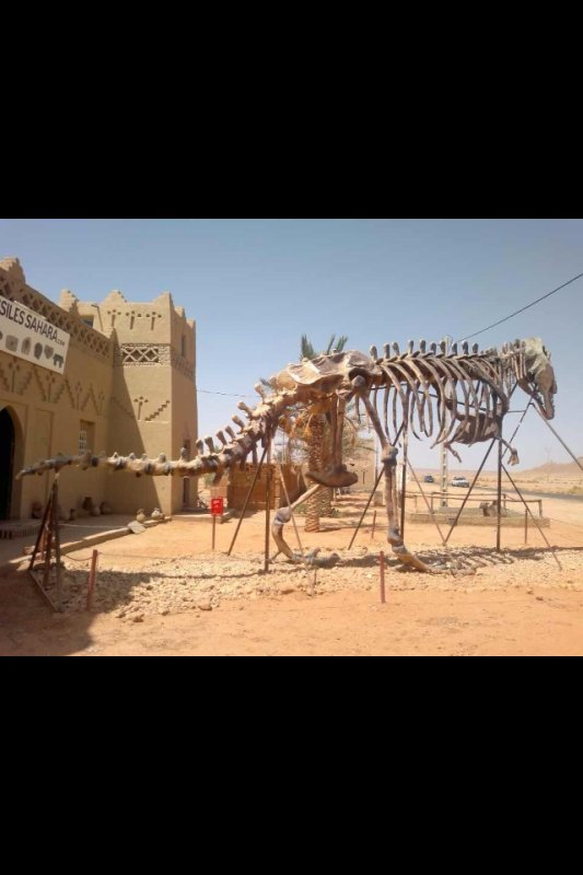 #Maroc #سفر#لبنان#مصر#الكويت#سوريا#libanc#travel#USA#morocco#voyage#egypte#egypt #tajin#traveltomorocco#المغرب#