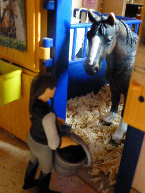 Laurine cherche une DP pour son cheval!