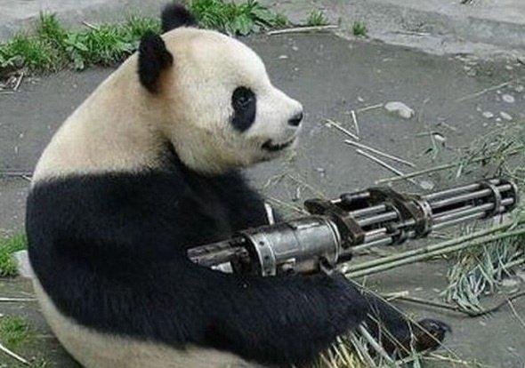 Panda militaire