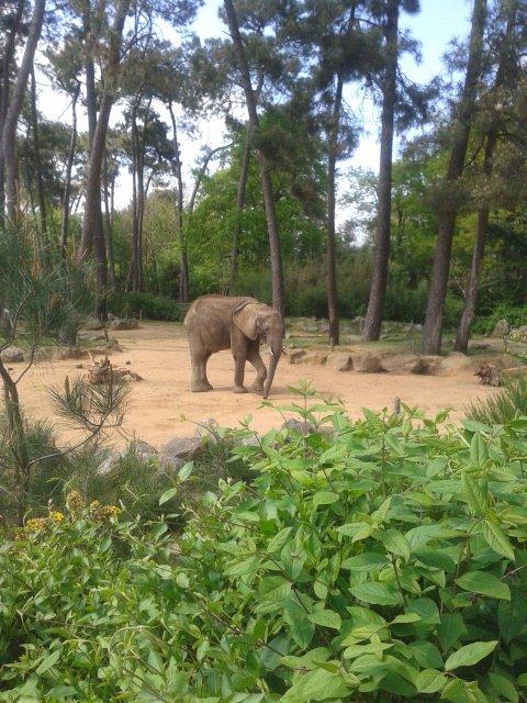 Ma Journée Au Zoo De La Fléche