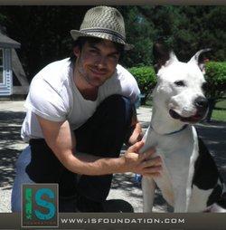 Pétition à signer pour les animaux! Ian Somerhalder supporte la cause à fond!