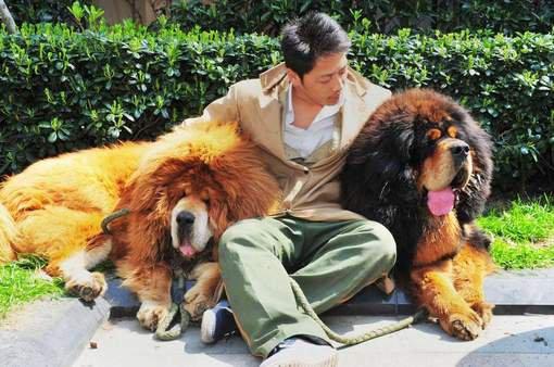 ANIMAUX : Un chien vendu pour 1,4 million d'euros