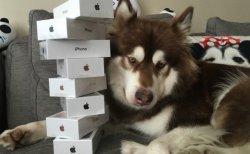 Il offre 8 IPhone 7 et 2 Apple Watches … à son chien
