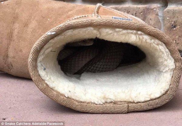 Elle retrouve un serpent dans sa botte