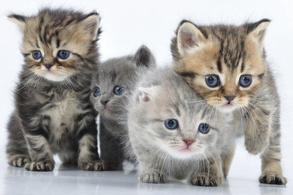 Quels sont les noms d'animaux les plus donnés en 2016 ?