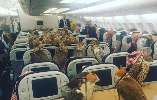 Il paie des billets d'avion à ses faucons