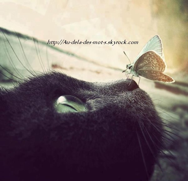 """"""" Il y a un moment pour tout, et un temps pour toute chose. Un temps pour grandir, un temps pour changer."""