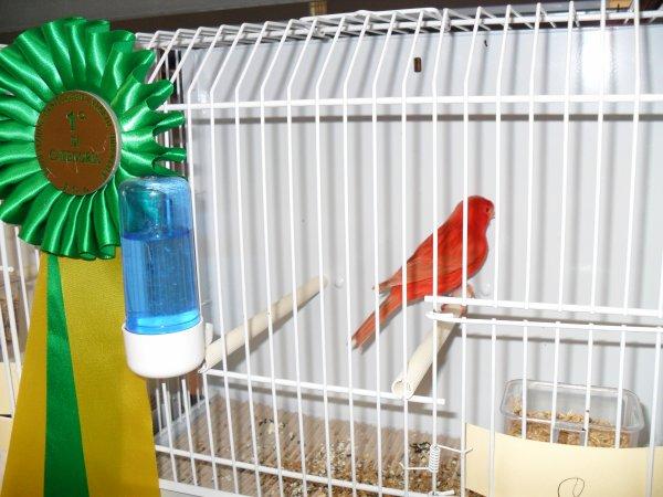 mostra ornitologica veneto orientale