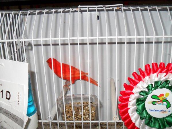 mostra ornitologica internazionale dell'adriatico