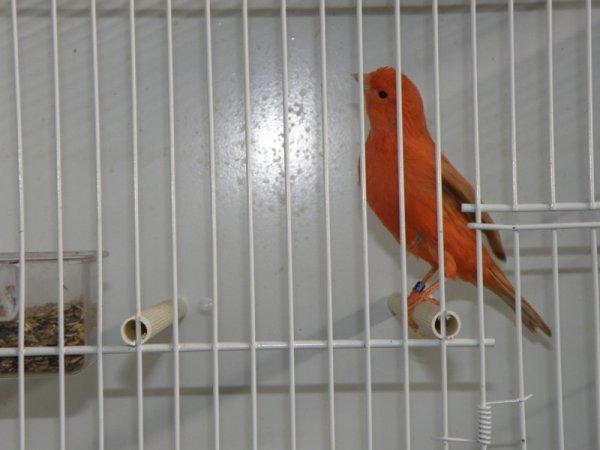 campionato italiano ornitologia  pordenone