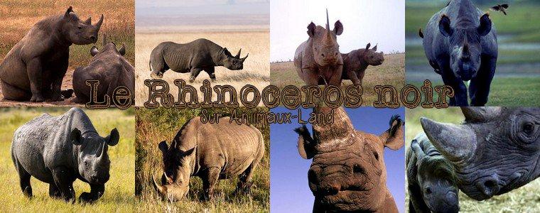 Article N°14__Le rhinocéros noir__Sur Aniimaux-land.skyrock.com