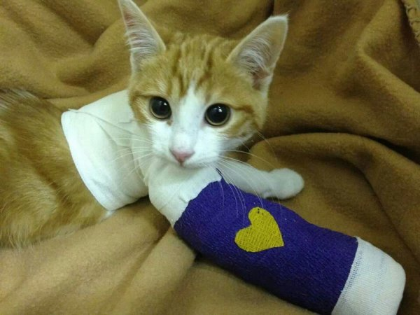 ce pauvre chaton qui c'est battre 😭