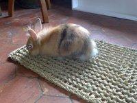 Jouets et jeux chouxpinoux ton blog lapins - Jeux pour lapin a fabriquer ...