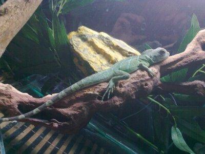 mon  dragon d eau