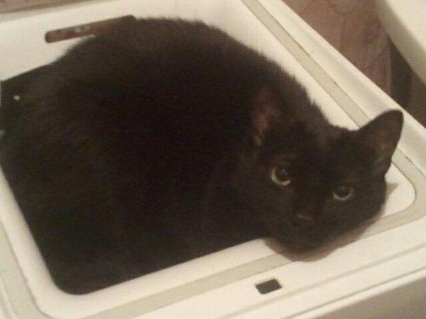 mon chat se trouve trop noir XD