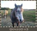 Photo de QenZo0-x3