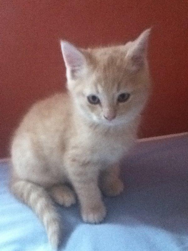 Mon chaton que j'ai décider d'appeler NEKO *_*