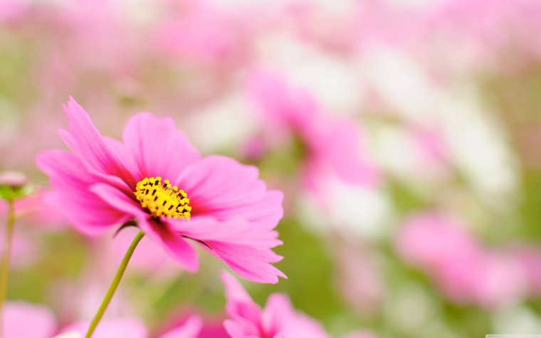 La semaine du printemps !! ♥
