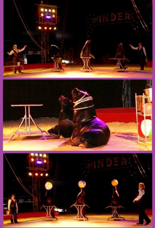 PINDER : LE SPECTACLE / LES OTARIES (1)