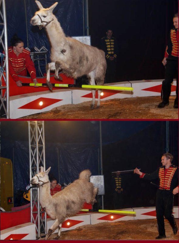 ZOO CIRCUS : LE SPECTACLE09