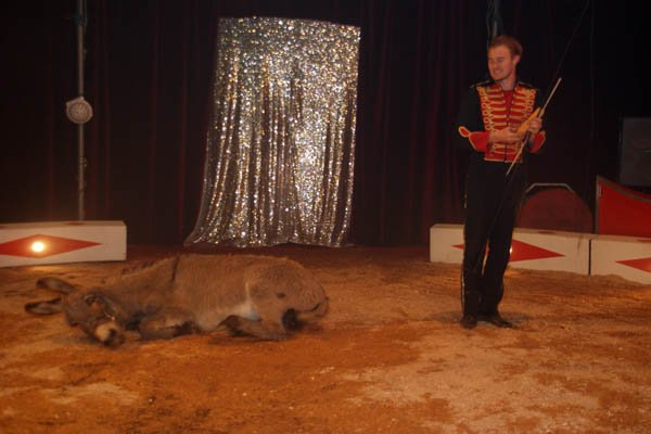 ZOO CIRCUS : LE SPECTACLE08