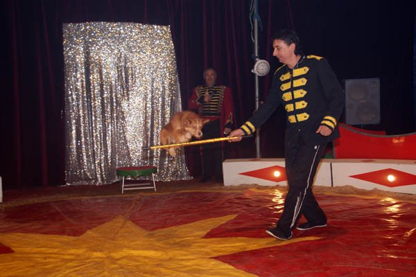 ZOO CIRCUS : LE SPECTACLE11