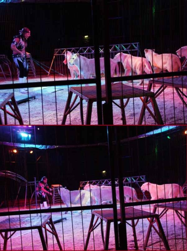 CIRQUE PINDER : LE SPECTACLE (01)