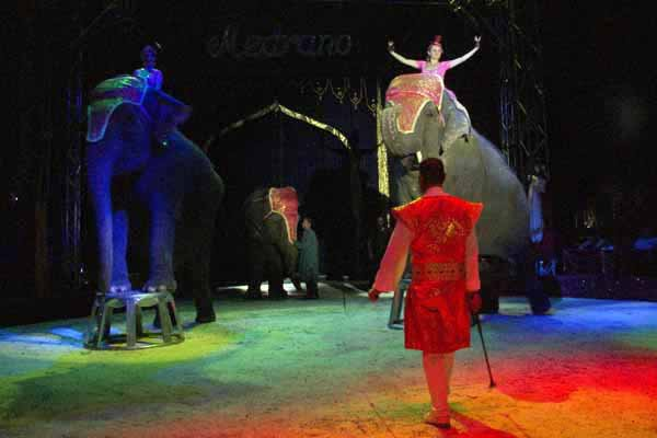 "MEDRANO : ""ALADIN"" LE SPECTACLE 25"