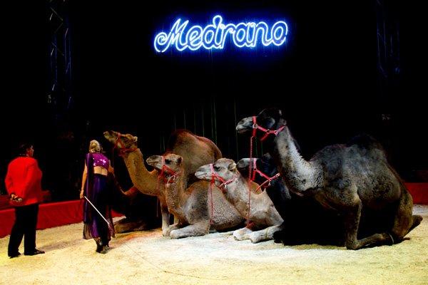 CIRQUE MEDRANO : KING-KONG 06