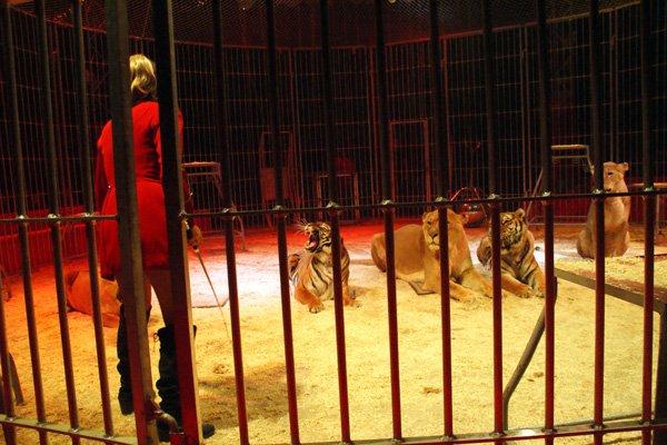 CIRQUE MEDRANO : KING-KONG 16