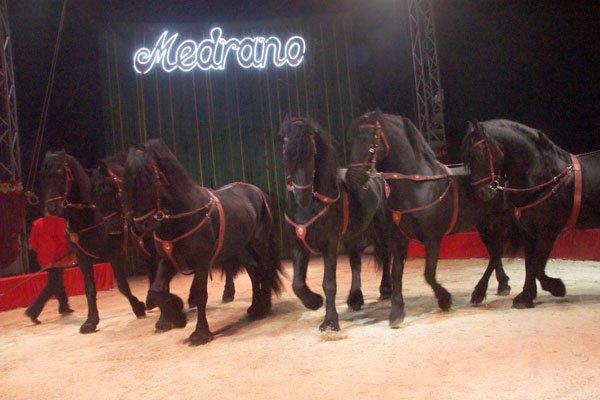 CIRQUE MEDRANO : KING-KONG 24
