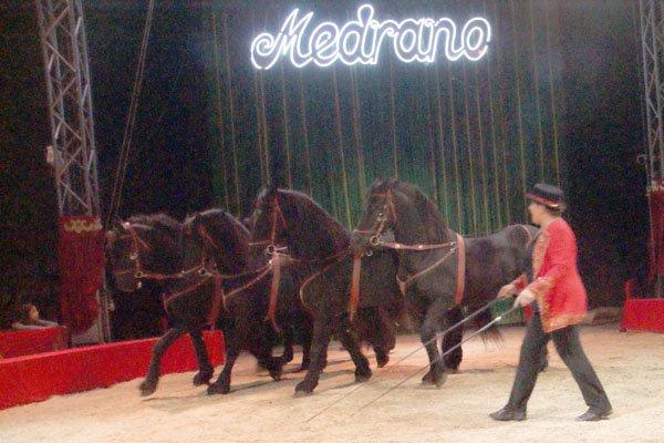 CIRQUE MEDRANO : KING-KONG 25